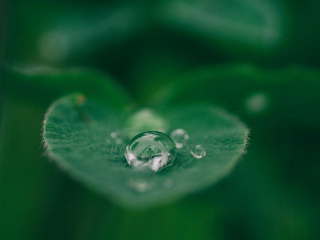 Vanndråpe på blad